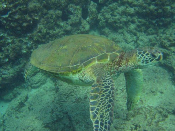megans turtle