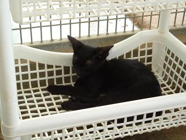 I'm taking a nap in my basket