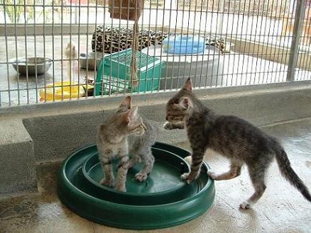 Kitten power!